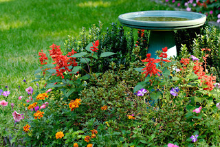 Garden with bird bath